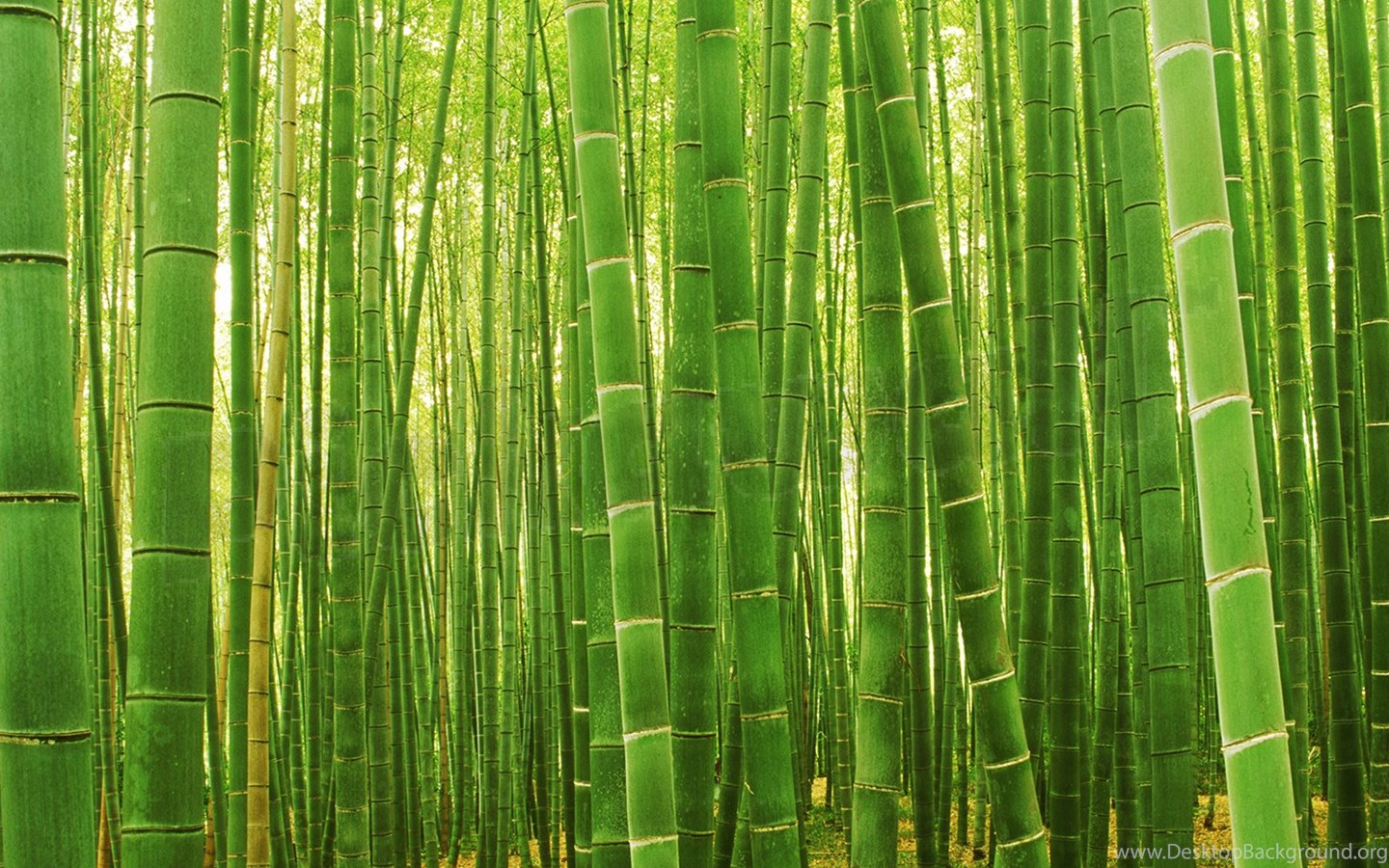 sagano bamboo forest wallpapers desktop background