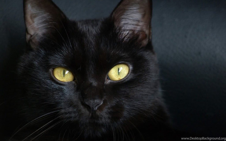 Beautiful Pure Black Cat Hd Wallpapers E Entertainment Black Cats Desktop Background