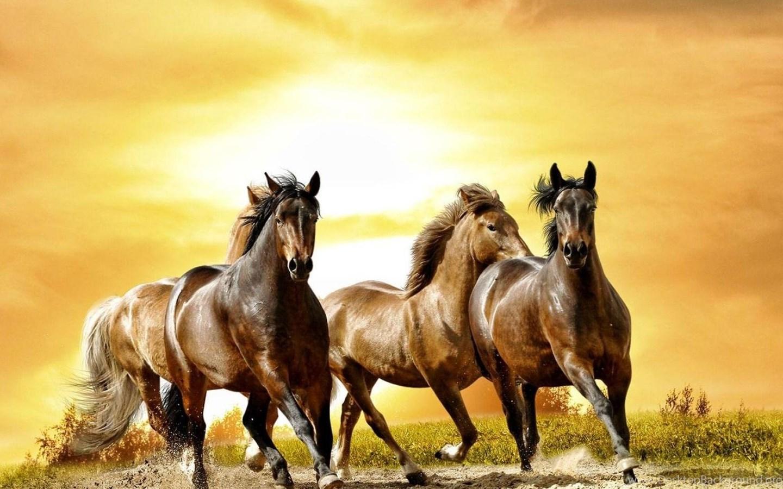 Running Horses Wallpapers Desktop Background
