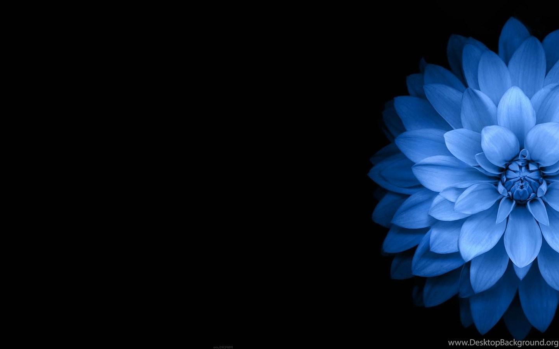 Flowers Blue Black Dark Wallpapers Hd Desktop And