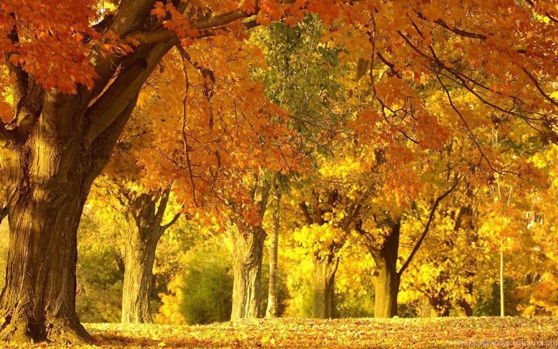Love Wallpaper Gambar Pemandangan Musim Gugur Yang Sangat Indah Desktop Background