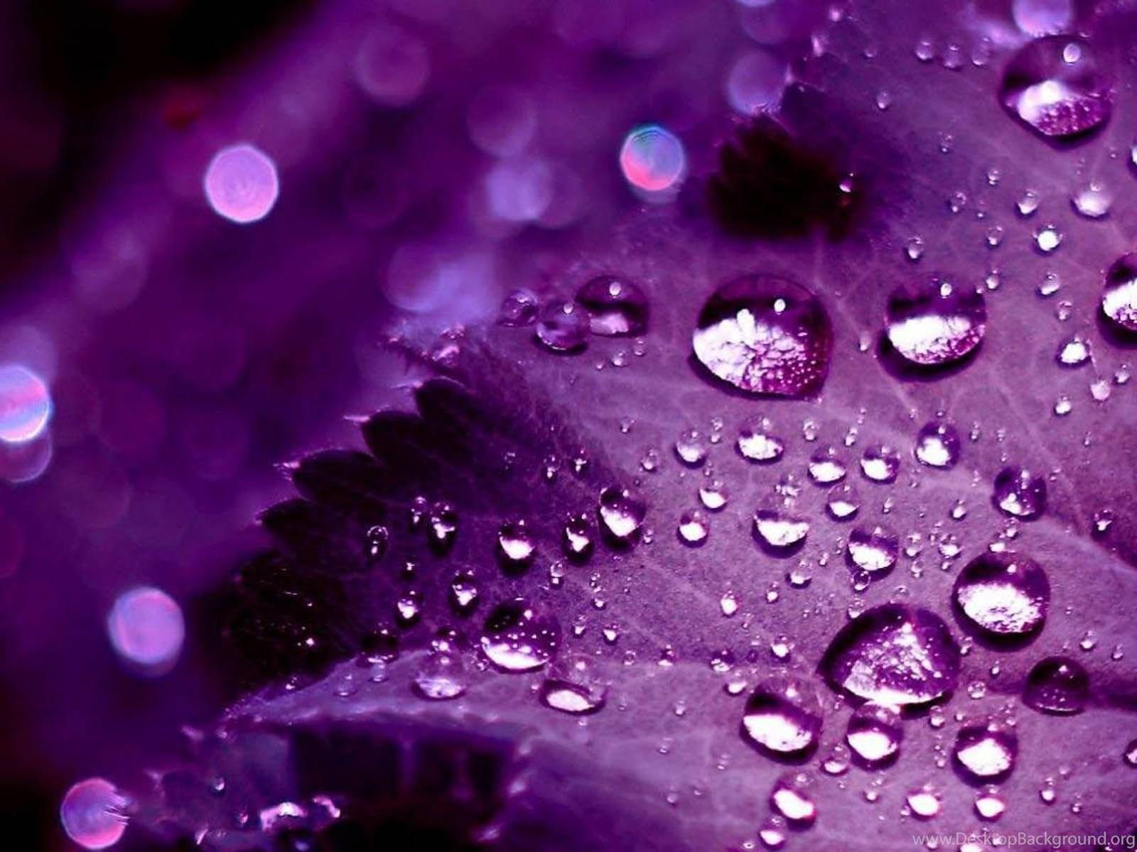 Картинки в фиолетовых тонах на заставку