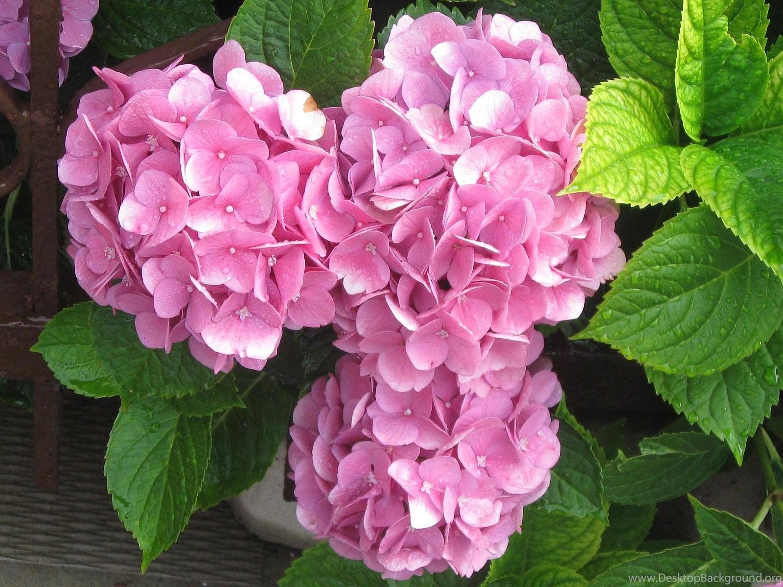 Beautiful Summer Flowers Wallpapers For Desktop Photography Heat