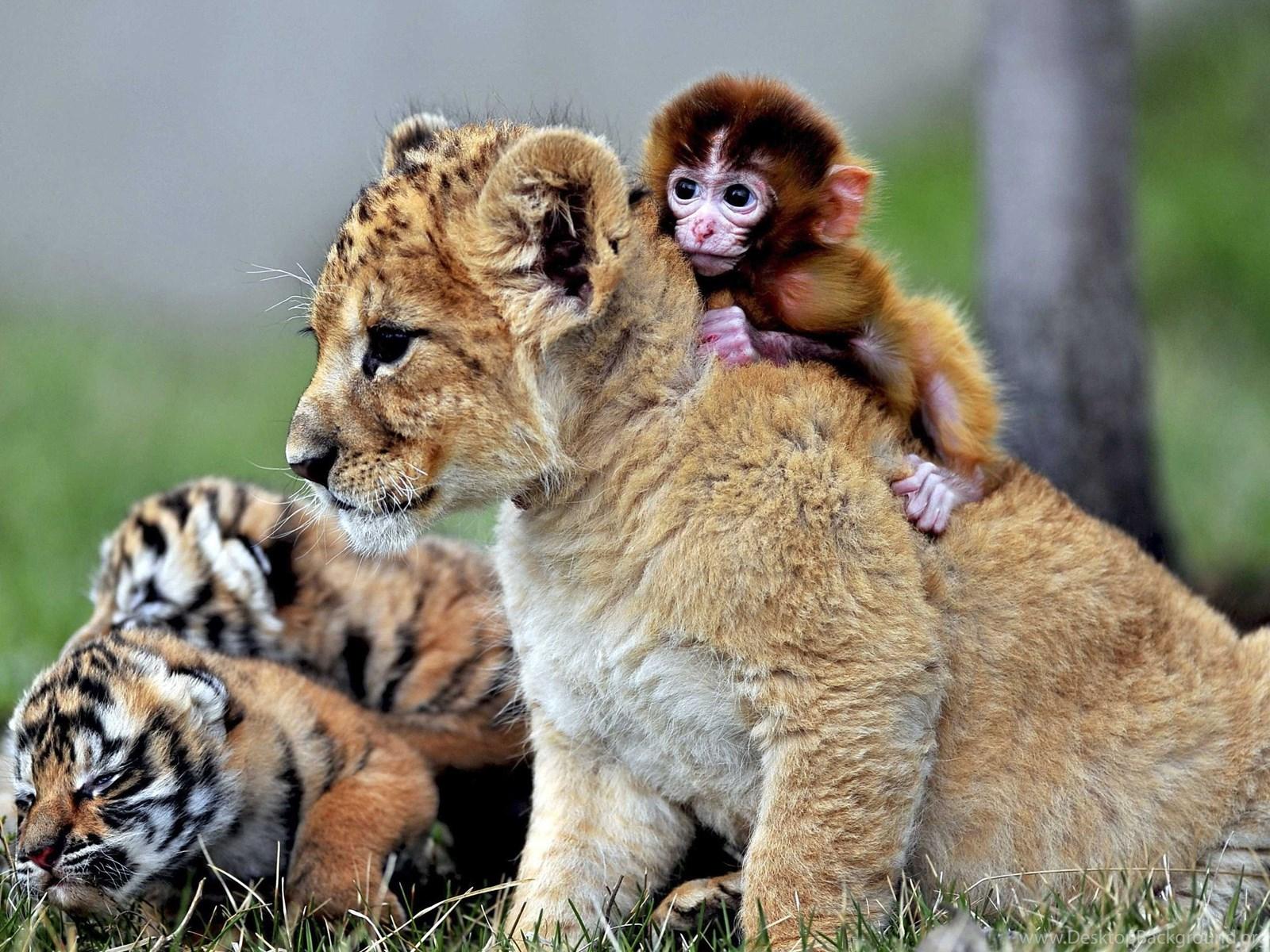 Animal Wallpapers Hd Animal Images Natural Life Wild: Cute Animal Wallpapers, Puffy, Hd Wild Life Photos, Pet