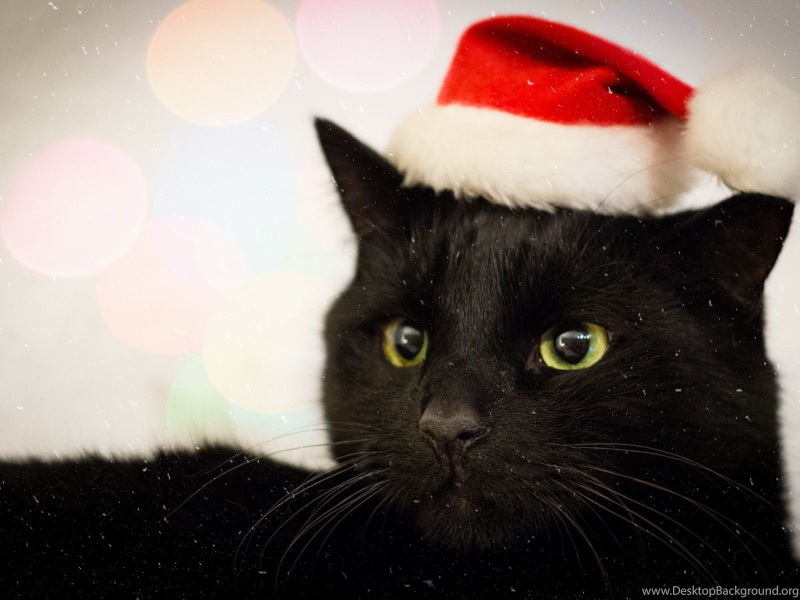 Black Cat In Santa Hat Wallpapers 7366 1920x1200 Umad Com Desktop