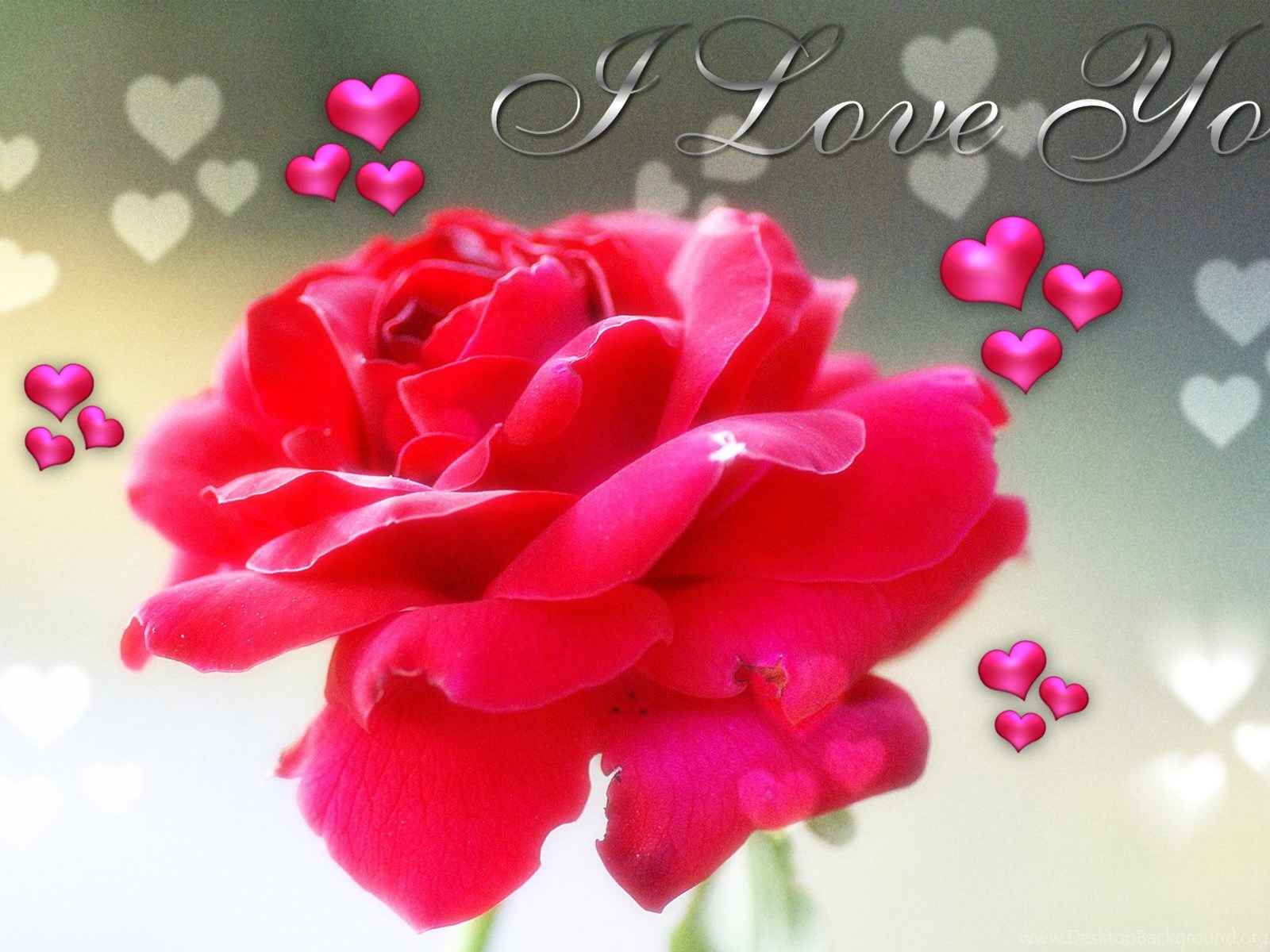 20 Best New I love you pictures with roses