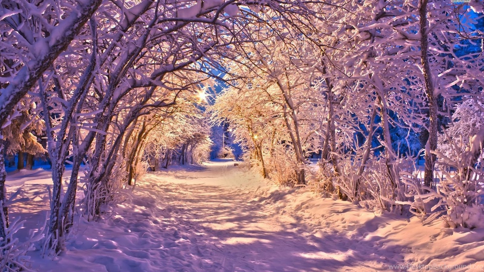 Болталка -5 - Страница 2 35505_snowy-alley-wallpapers-nature-wallpapers_1680x1050_h
