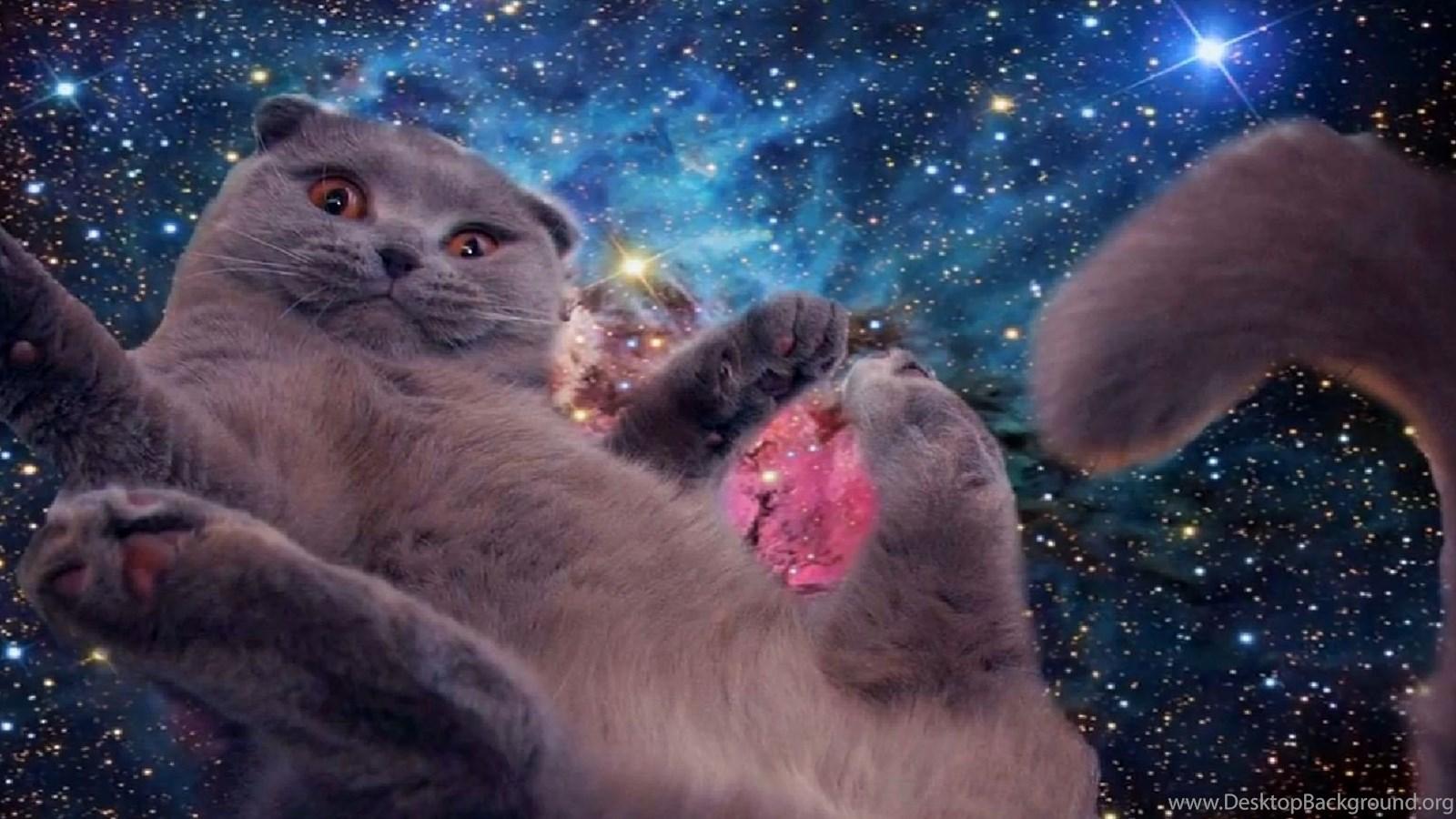 Space Cat WallpapersThe Invasion Has Begun Kneel Album