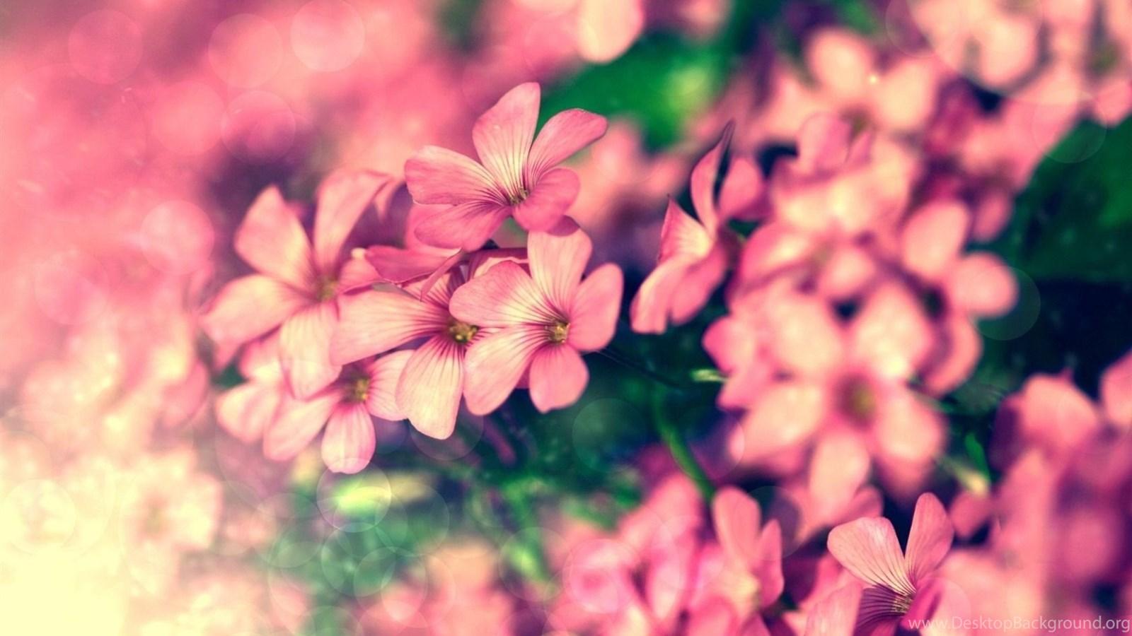 Tiny Pink Flowers Beautiful Flowers Desktop Wallpapers 16801050