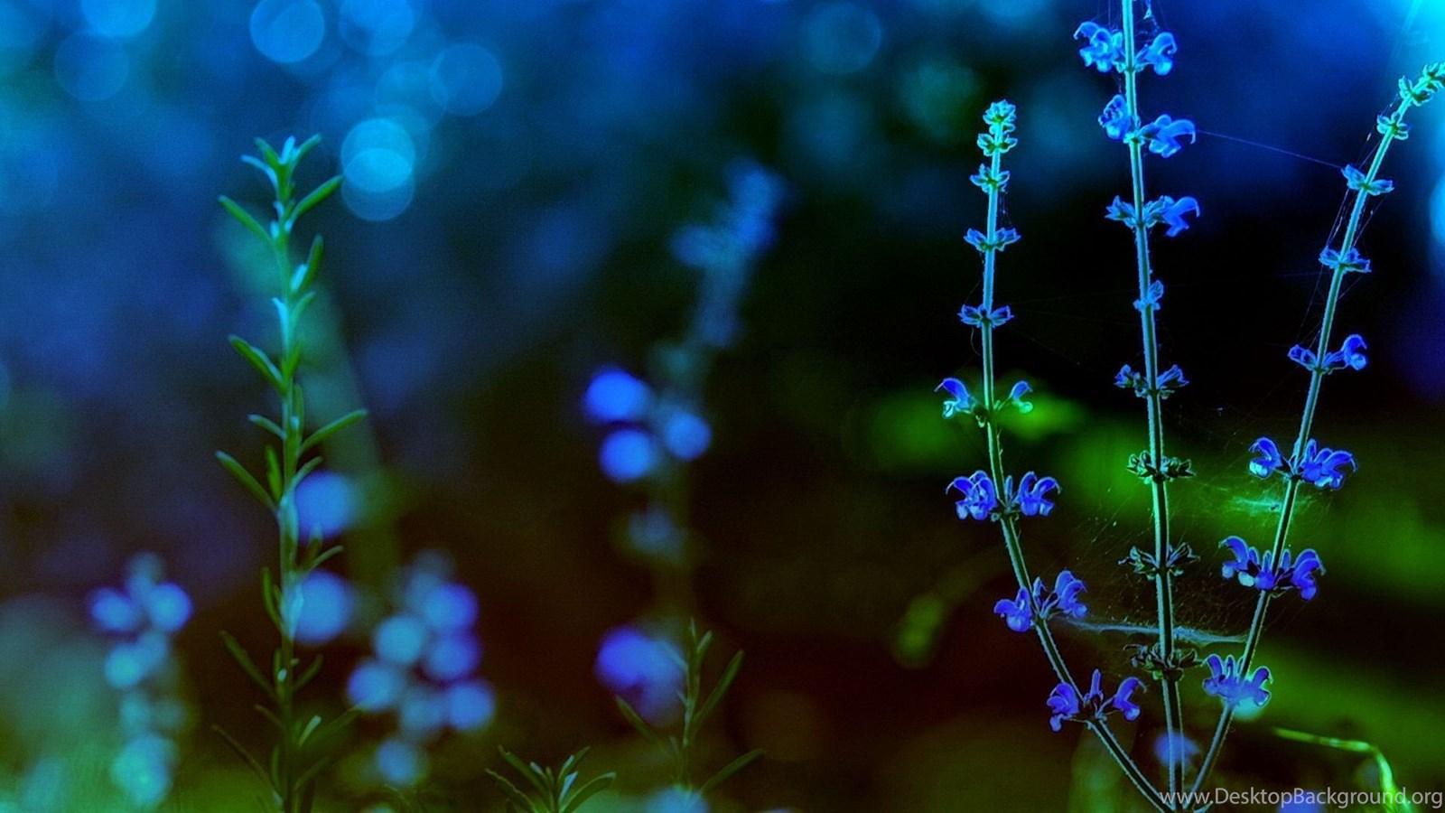 Spring Flowers Wallpapers Widescreen Desktop Background