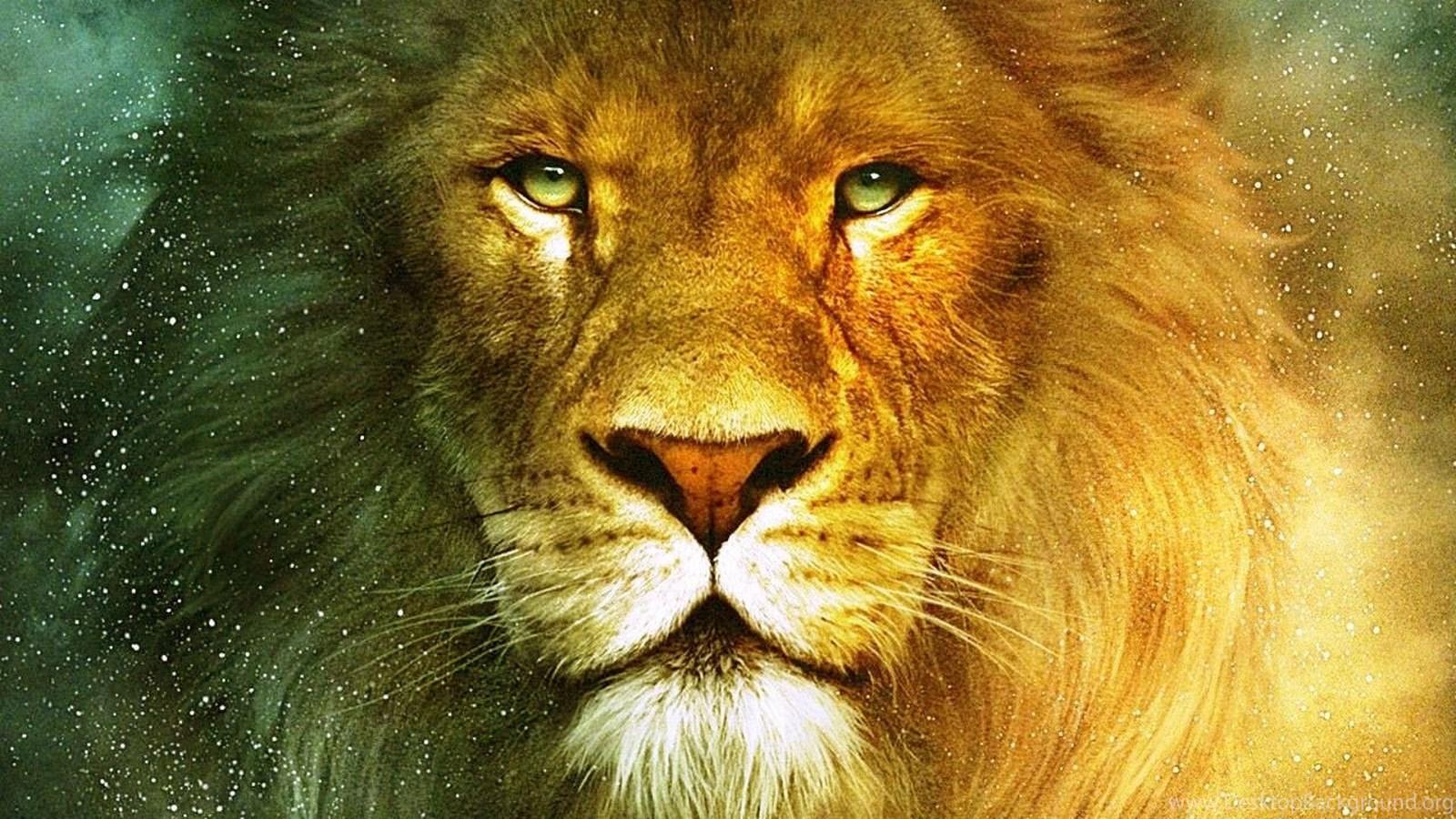 Lion wallpapers desktop background - Lion wallpaper ...