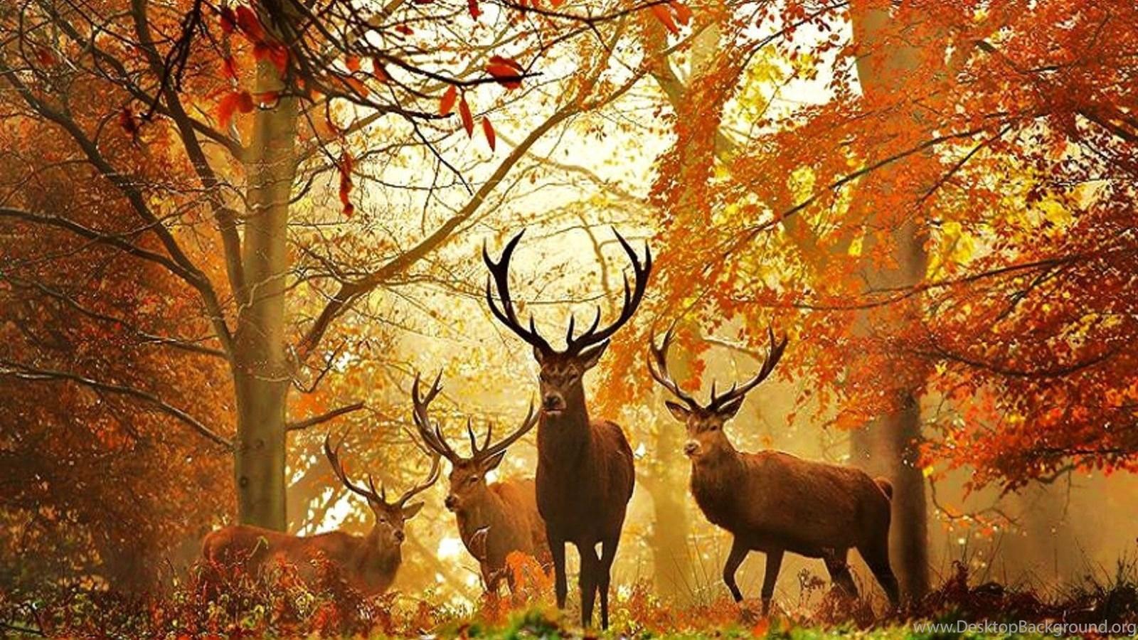 Deer Hunting Backgrounds Desktop Background