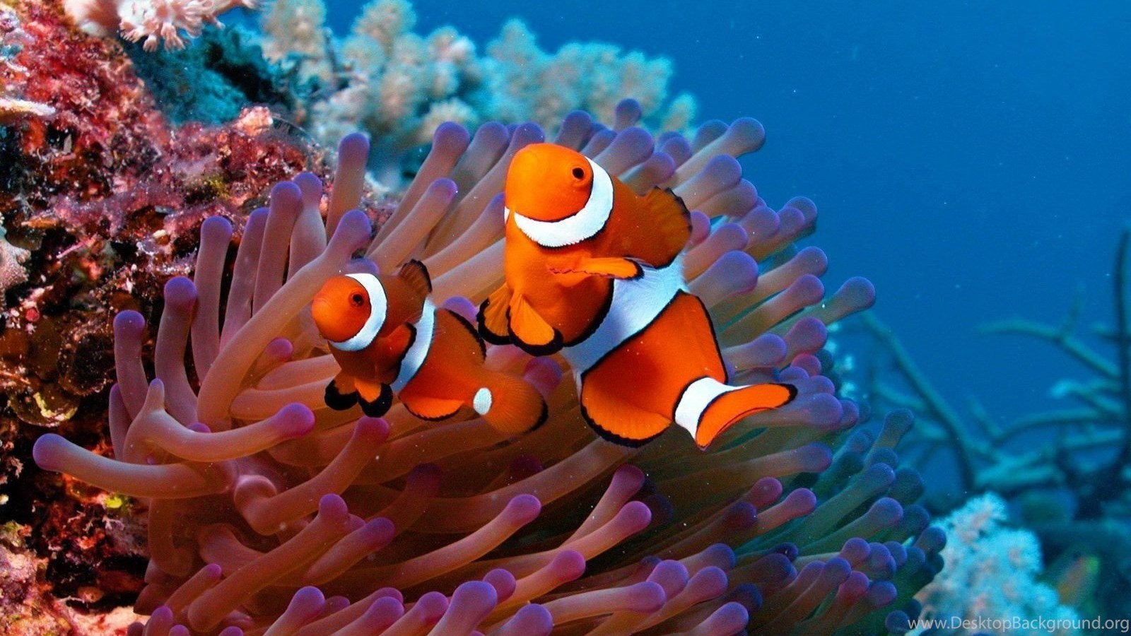 High Definition Fish Wallpapers For Free Download Desktop Background