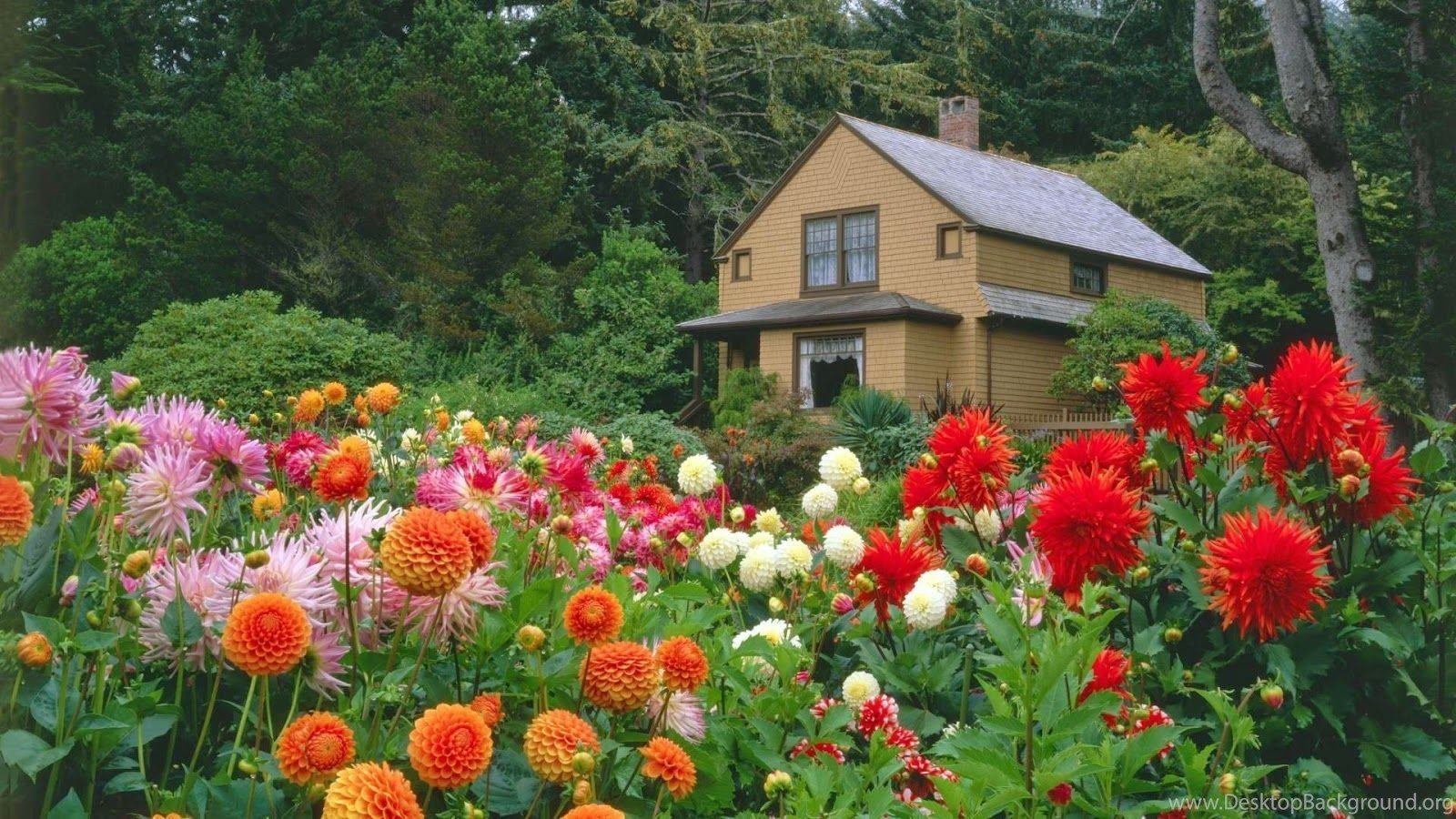 Flower Garden Wallpapers Free Download Desktop Background