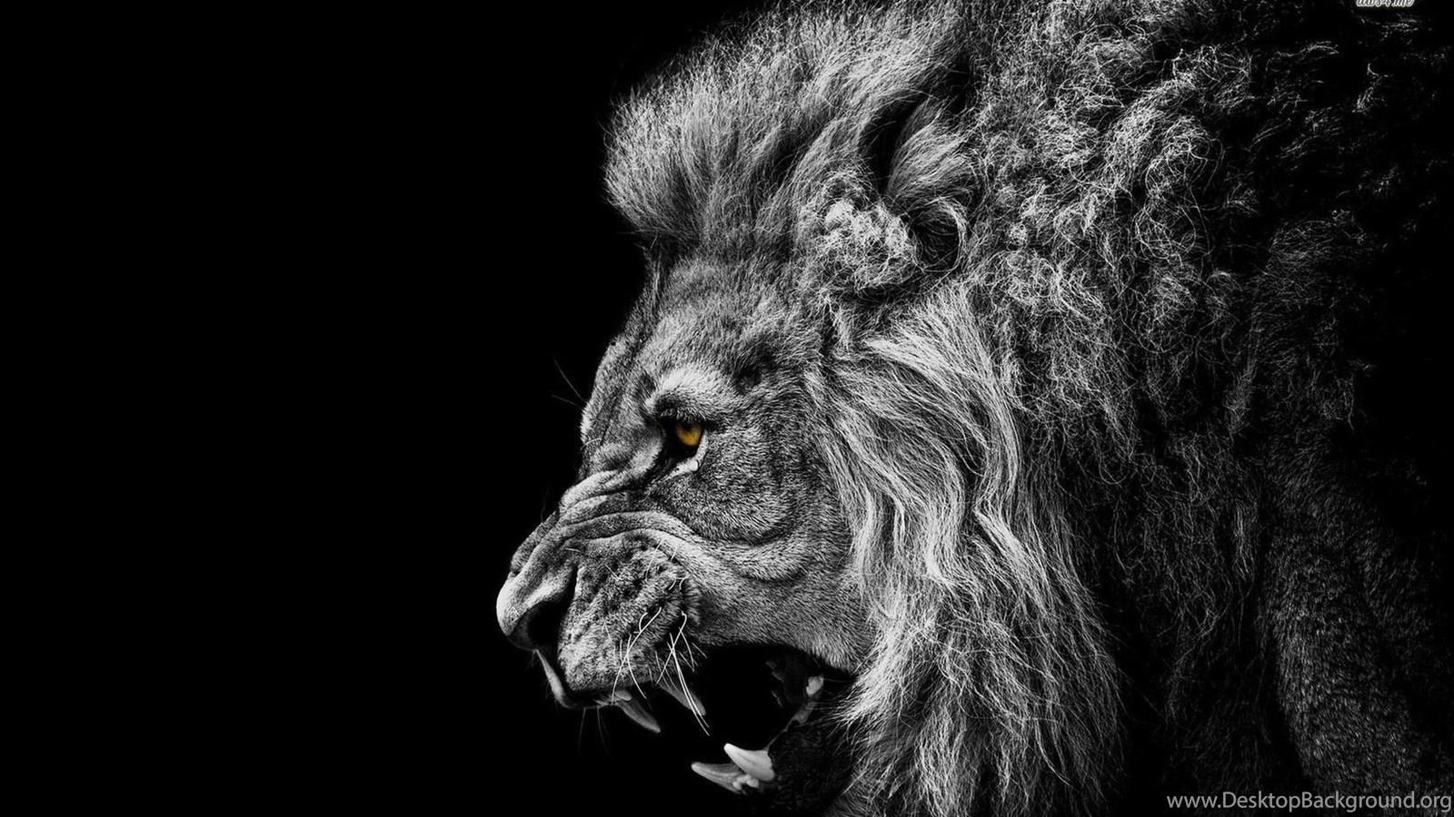 Lion Roar Wallpapers HD 3311 Site Desktop Background