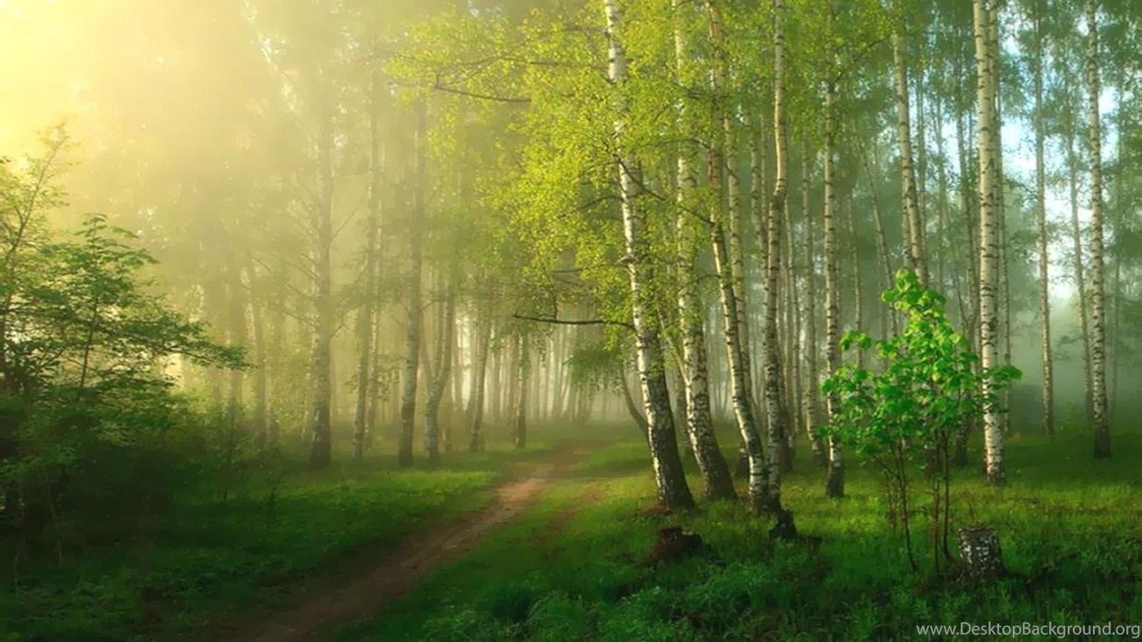 весной в лесу  № 113963 без смс