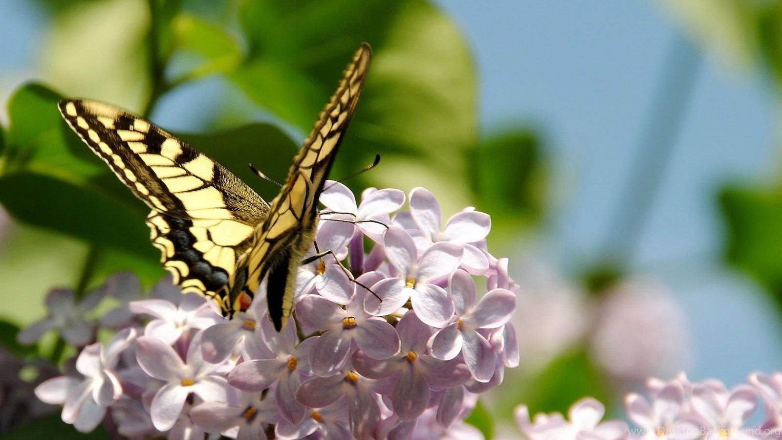 Spring butterfly wallpapers desktop 7779 hd wallpapers - Wallpapers sites list ...