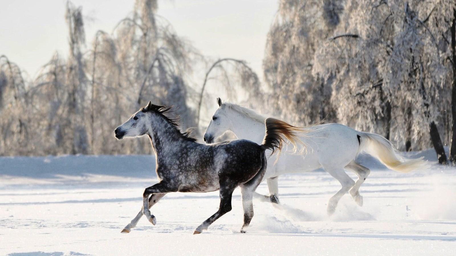Free Horses Wallpapers Hd Toptenpack Com Desktop Background