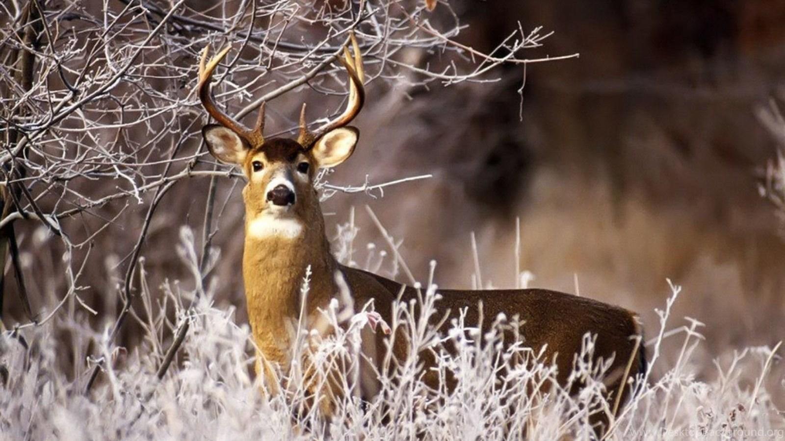 Deer Hunting Wallpapers For Computer Wallpapers Cave Desktop Background