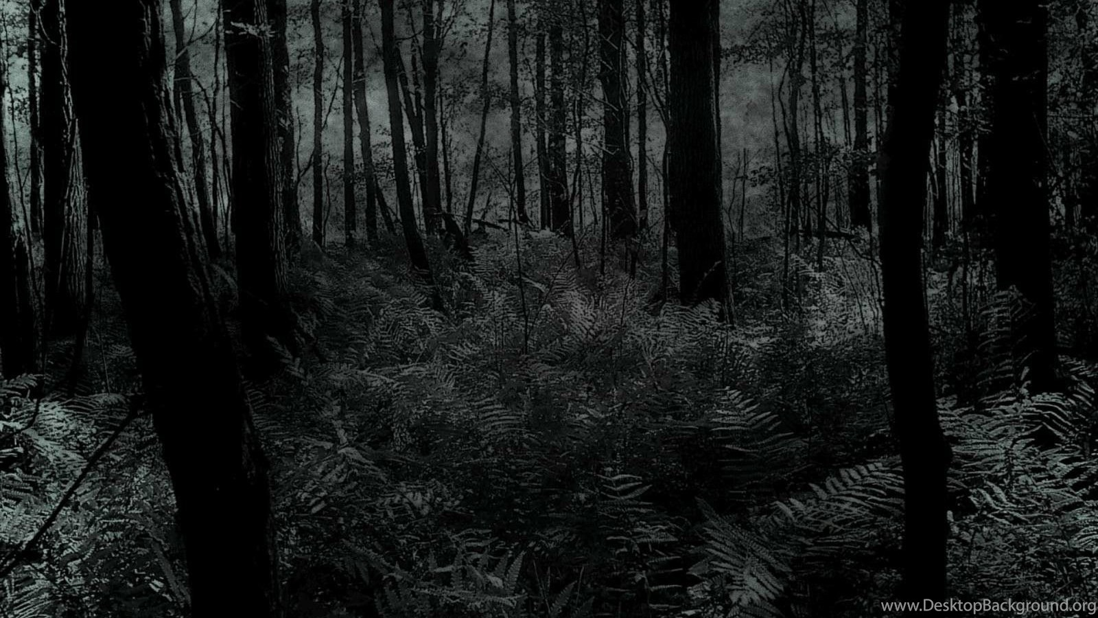 Dark Forest Wallpapers HD Desktop Background