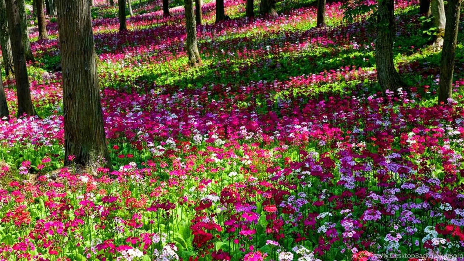 Flower Garden Flower Garden Wallpapers Sky HD Wallpaper, 32