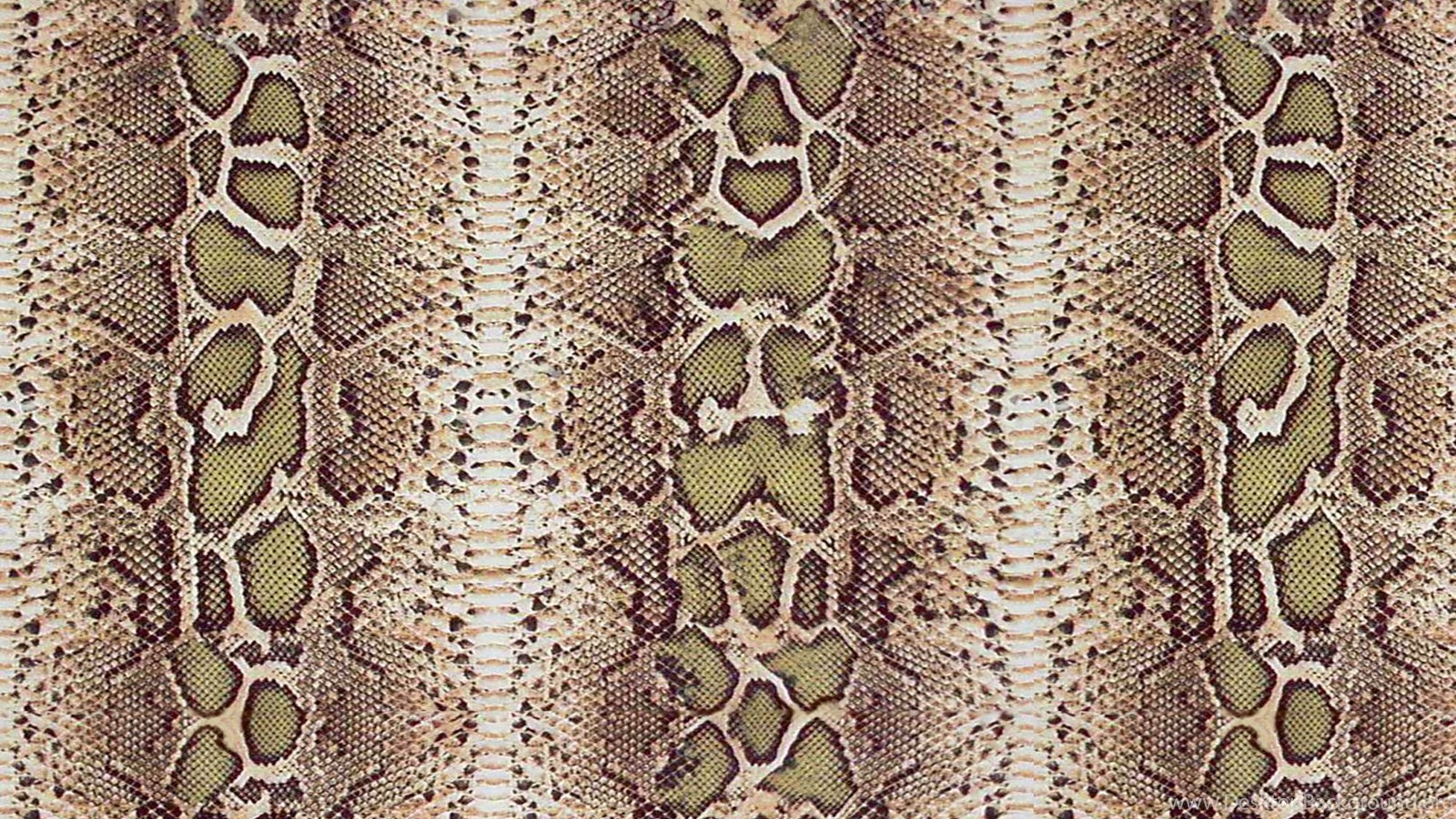 wallpapers snake skin free snakeskin crocodile and
