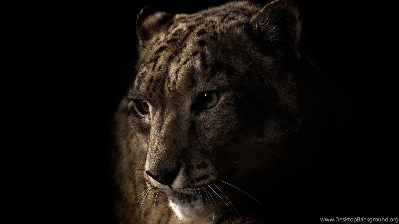 Black Jaguar Animal Black Jaguar Wallpapers Animal Johnywheels Desktop Background
