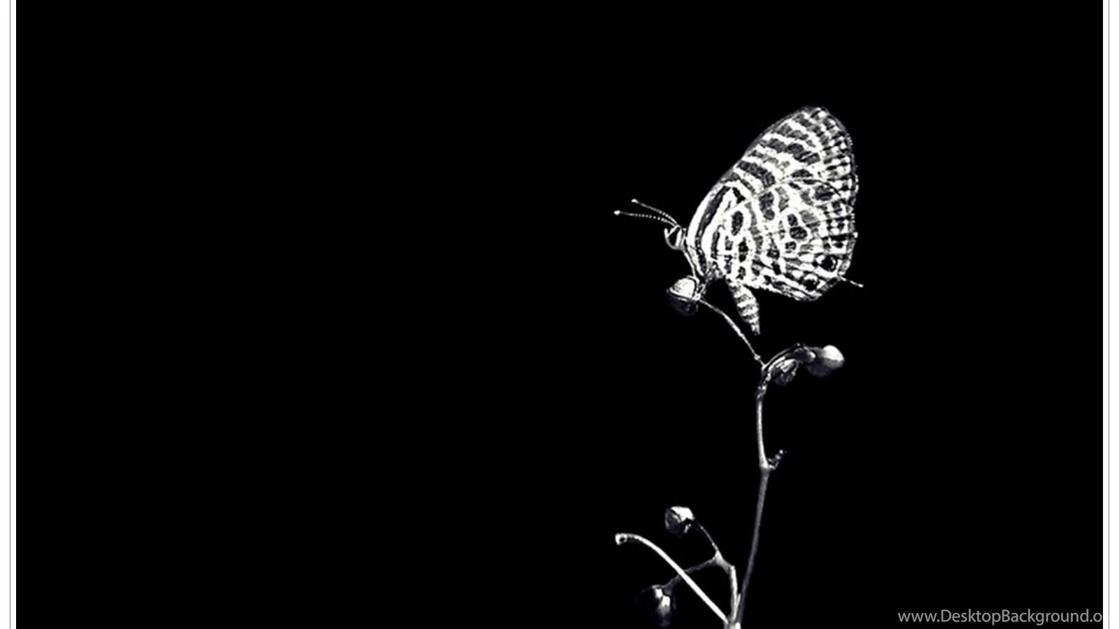 World Black White Butterfly Butterflies Wallpapers Gallery