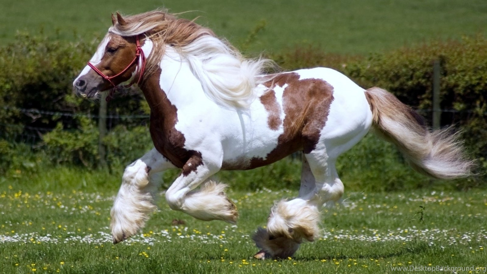 Running Horse Hd Wallpapers Download High Quality Wallpapers Free Desktop Background
