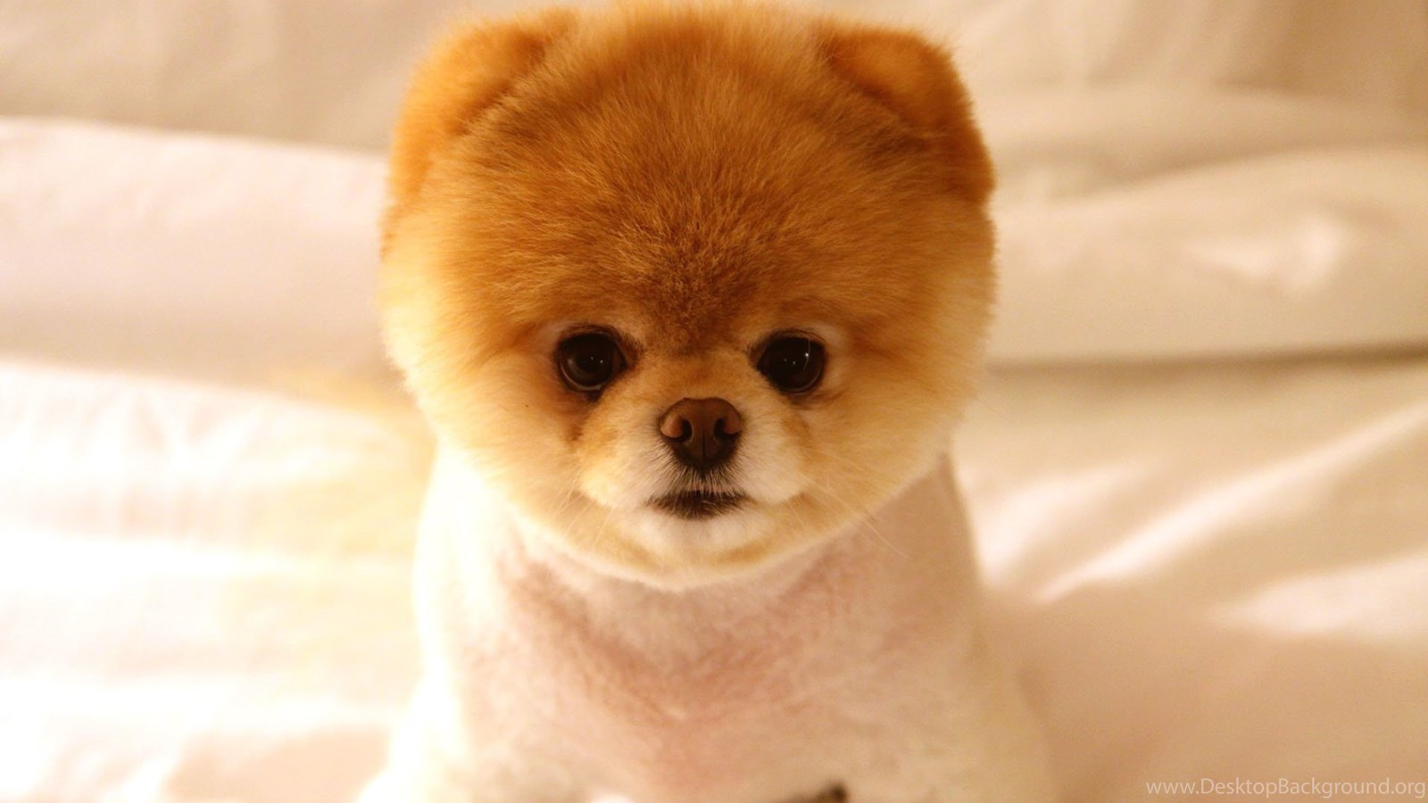 [Image: 760409_iphone-wallpapers-tumblr-cute-dog...1200_h.jpg]
