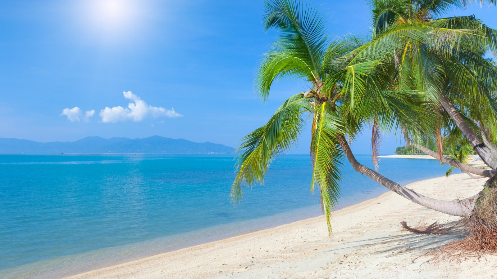 Coconut Tree Beautiful HD Wallpapers And Images Desktop
