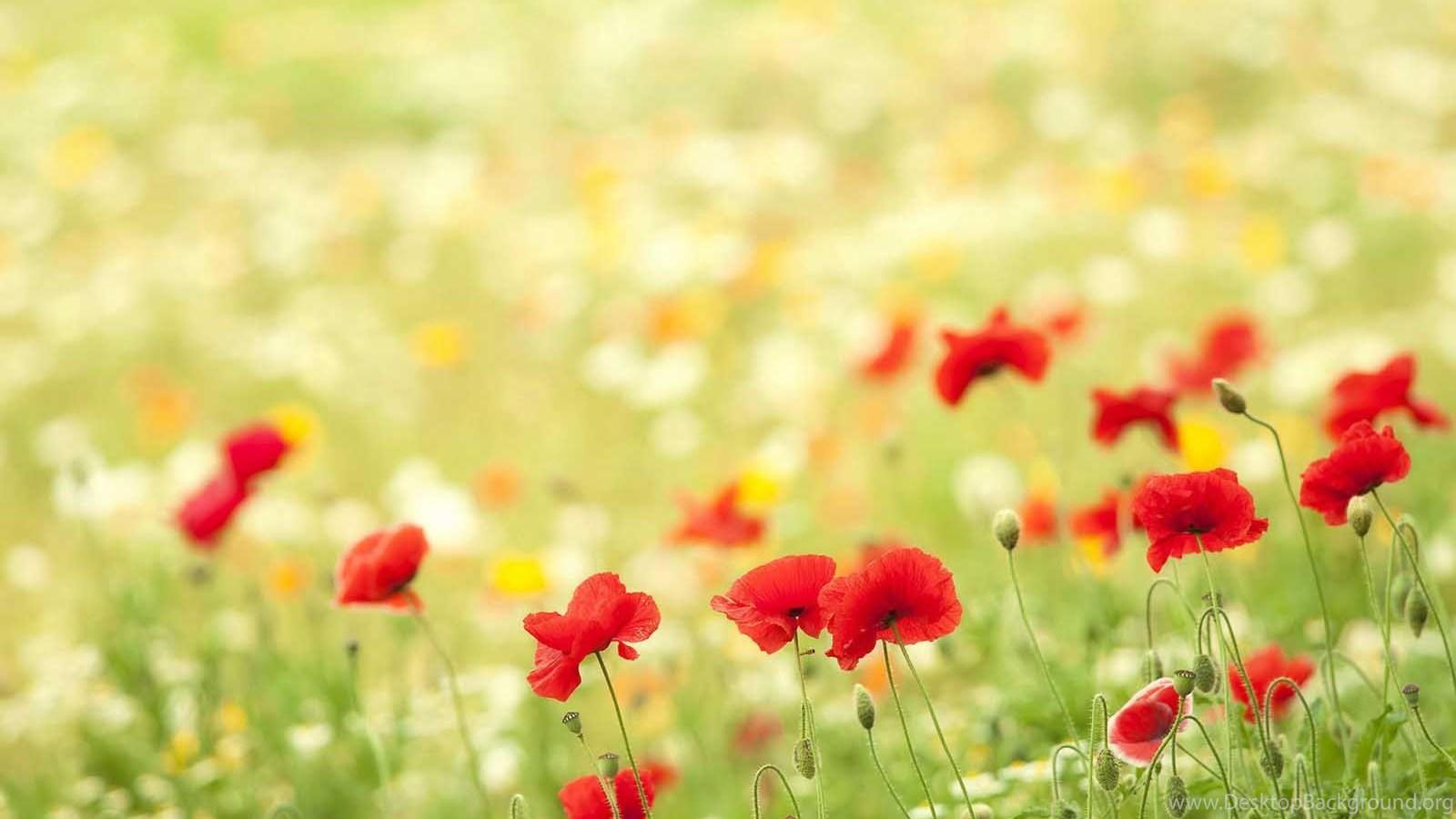 beautiful flower scenery hd wallpapers for desktop desktop background