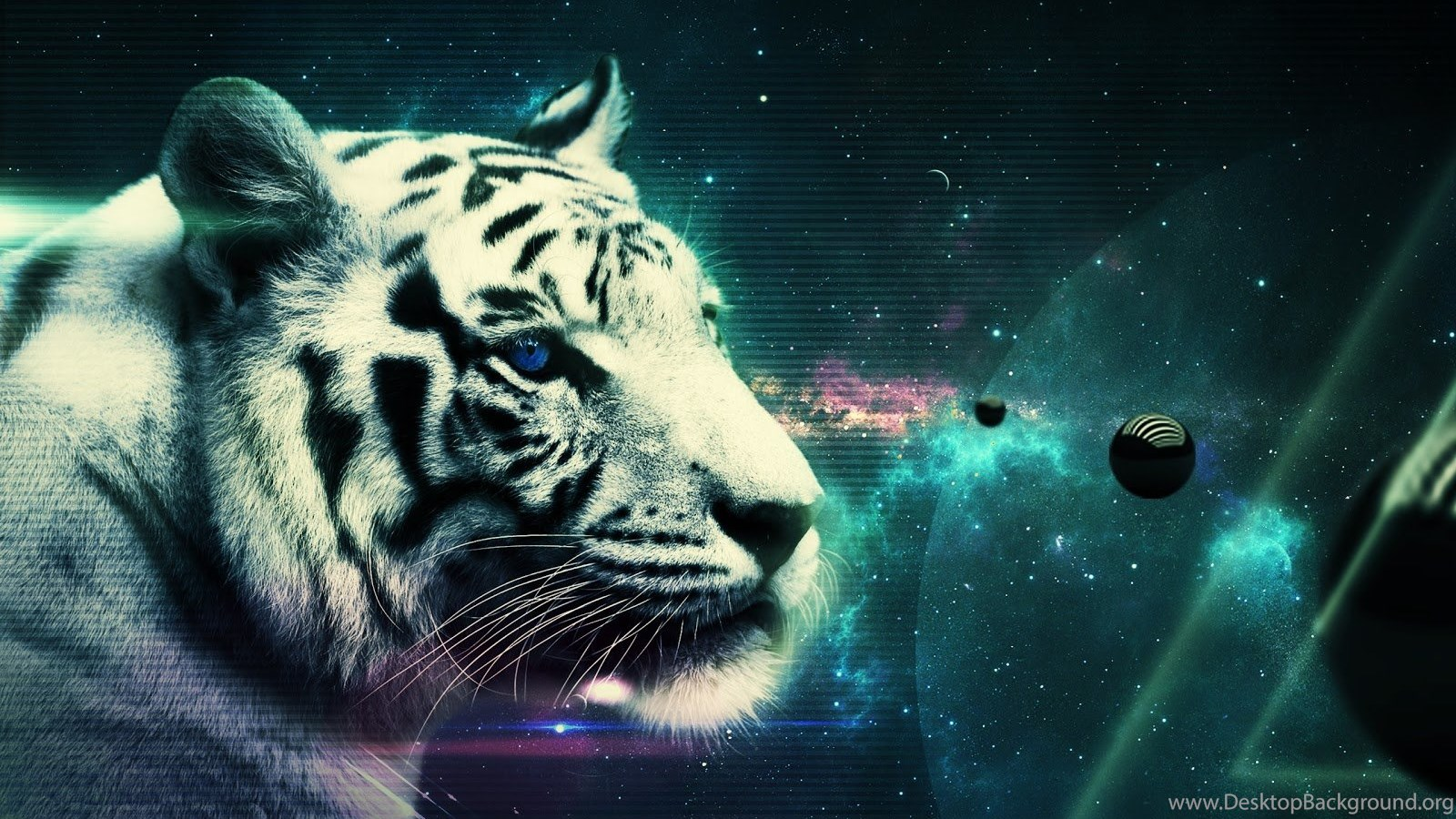 free download wallpapers hd : white tiger,beautiful tiger,hd tiger