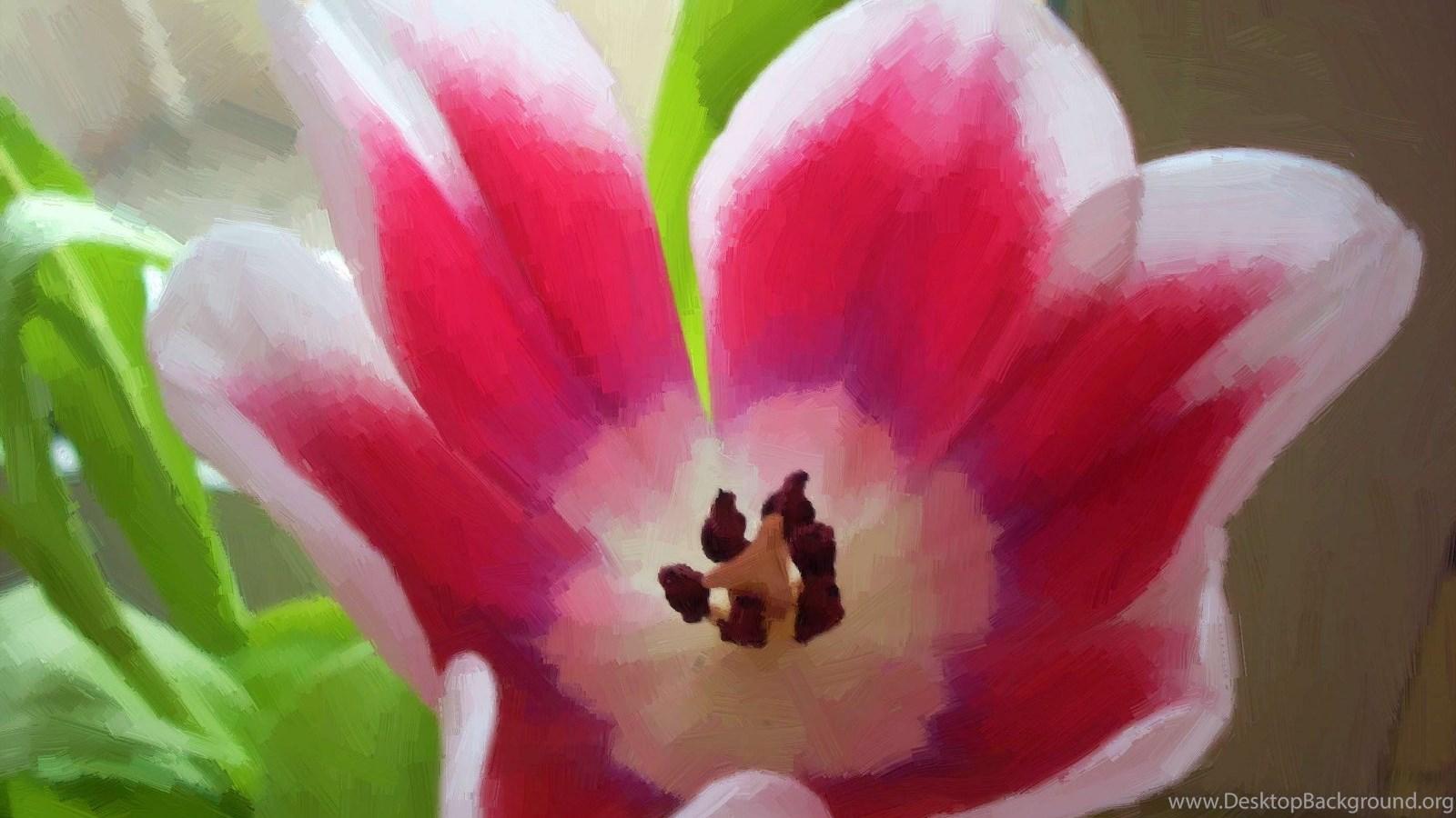 Beautiful Flowers In The World Wallpapers Photo Uncalke Desktop