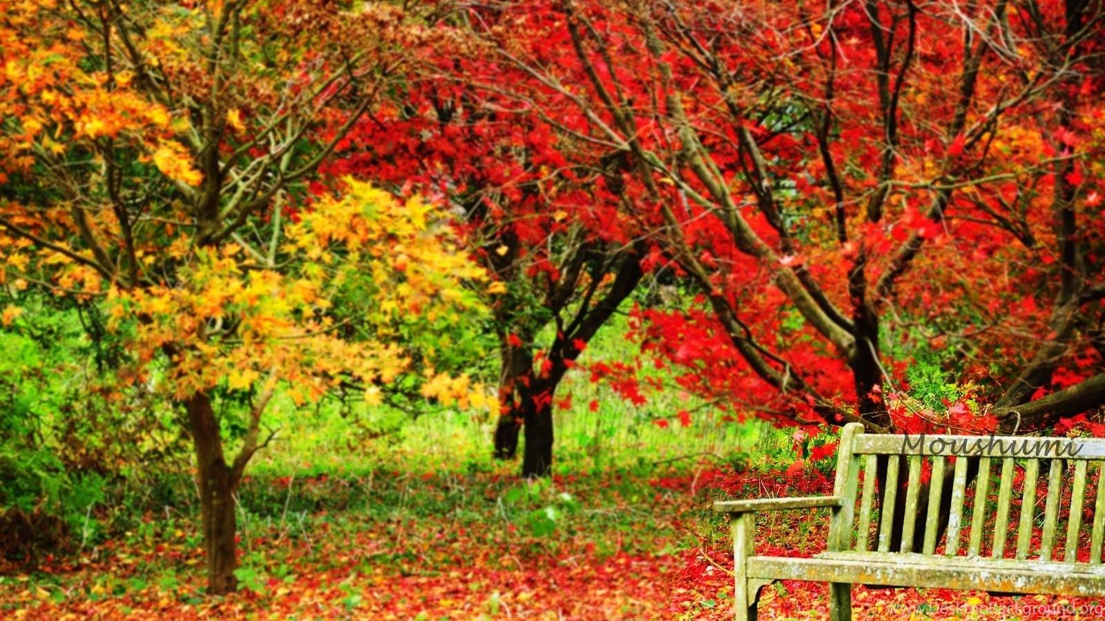 Autumn November Wallpapers Full Picture Desktop Background