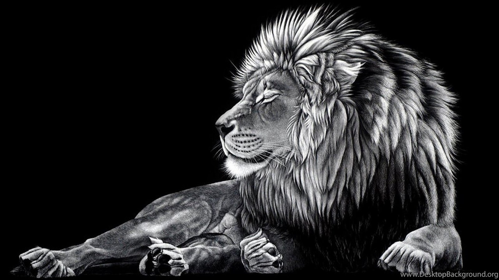 Lion Black And White Wallpapers Mobile Desktop Background