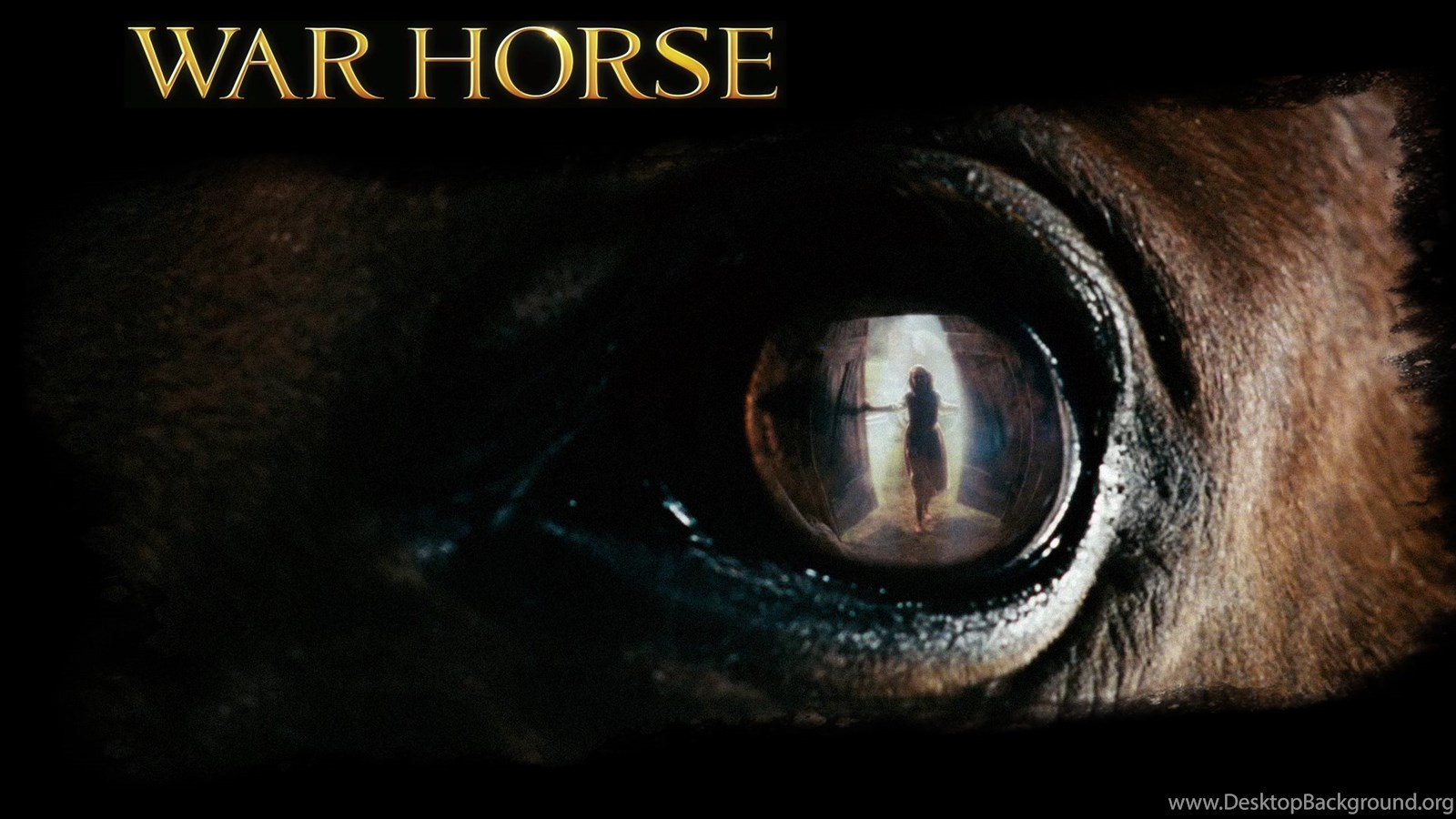 War Horse Wallpapers Desktop Background