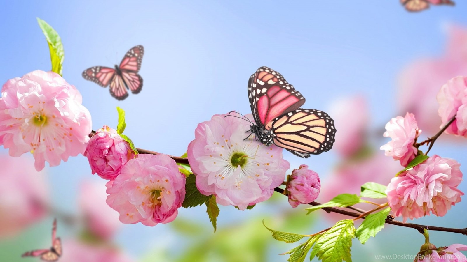 Spring Flowers And Butterflies Wallpapers Popular Flowers Desktop