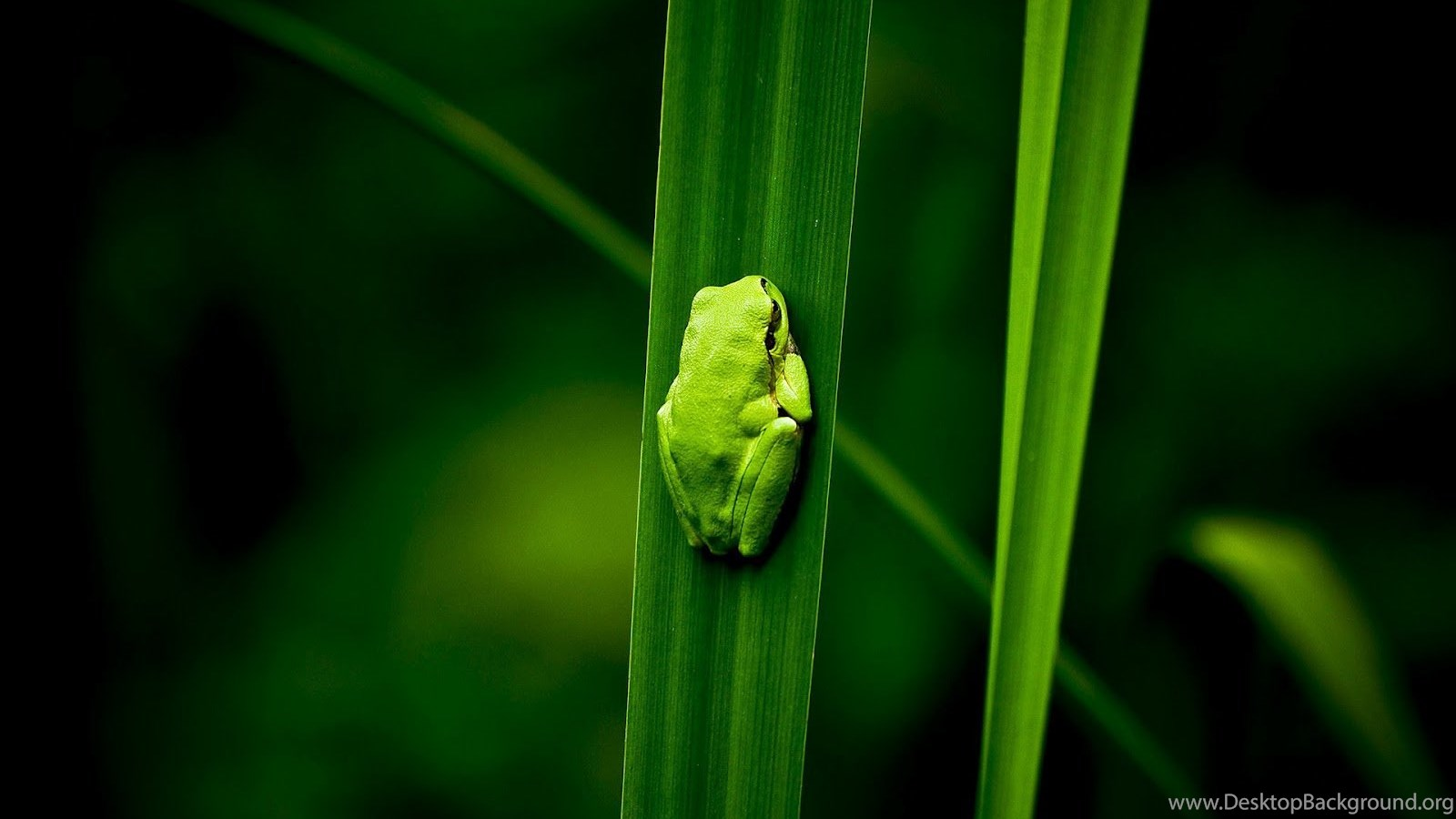 28 excellent hd frog wallpapers hdwallsource desktop background