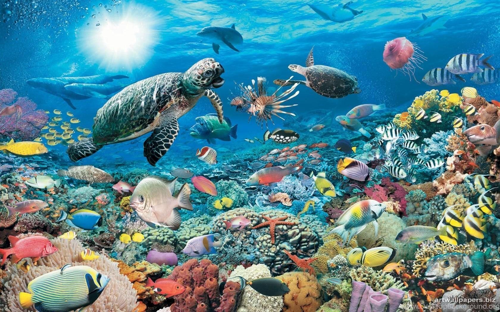 вас картинка моря и морских обитателей желании