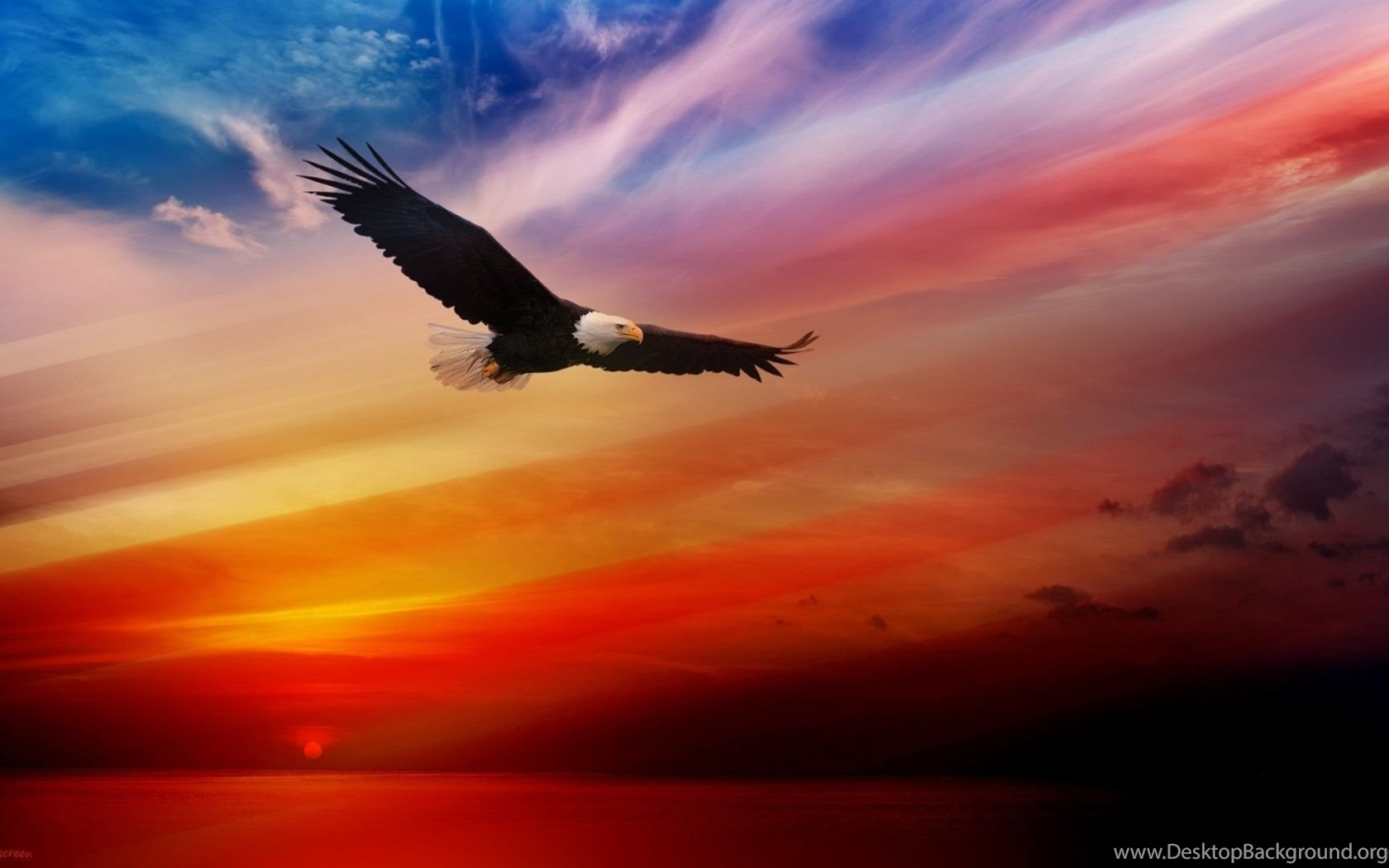 free bald eagle wallpapers desktop background