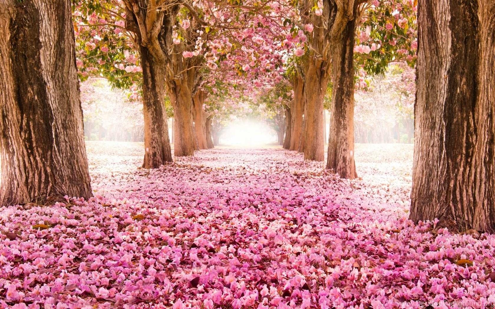 Spring Flowers Wallpapers Hd Of Cool And Beautiful Flowers Desktop