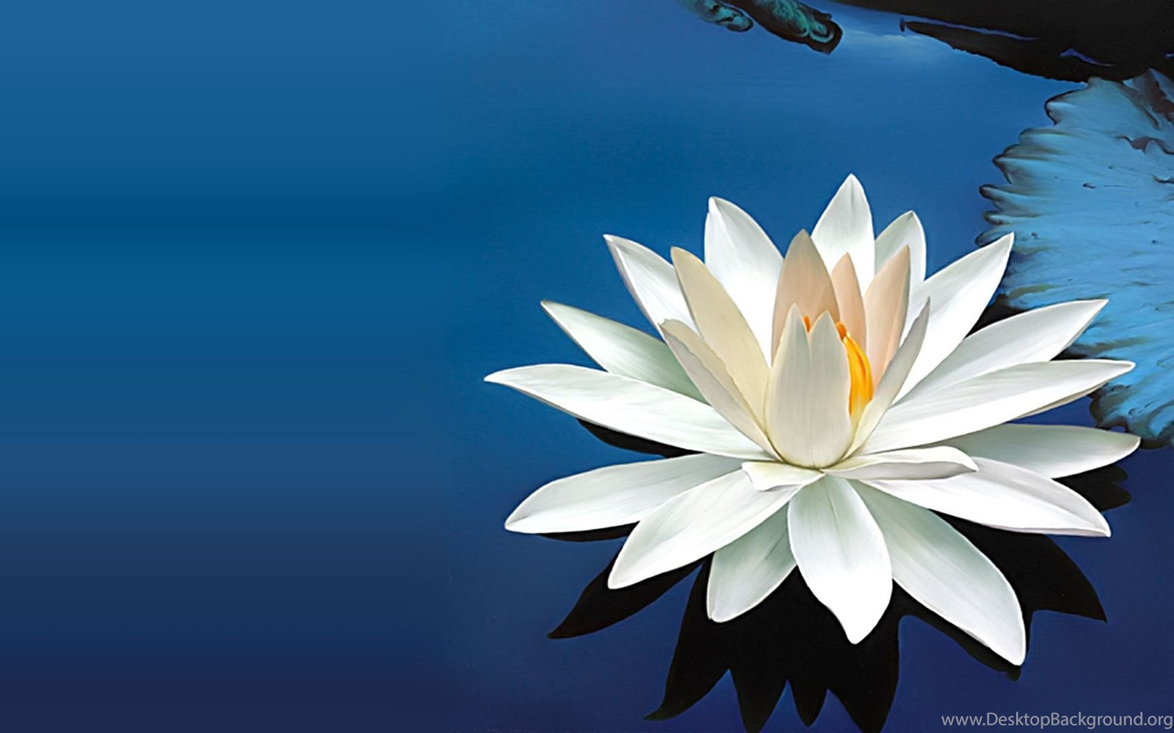 Lotus white lotus flower pics finehdwallpaperr desktop background widescreen izmirmasajfo