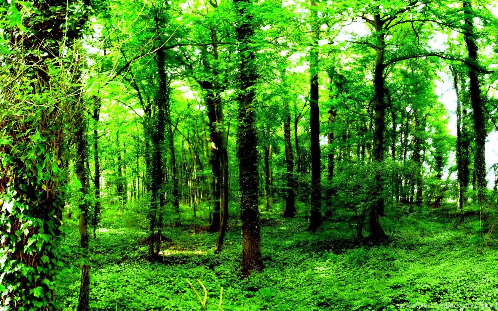 Green Forest Backgrounds HD Wallpapers Desktop Background