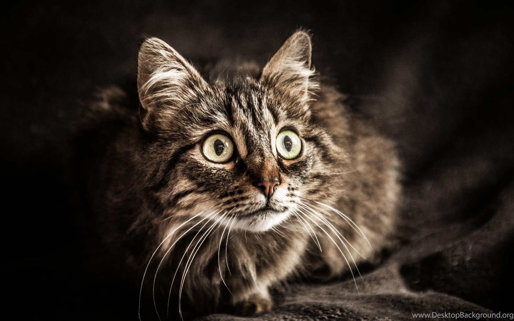 Unduh 42 Koleksi Wallpaper Hd Cat HD Gratid