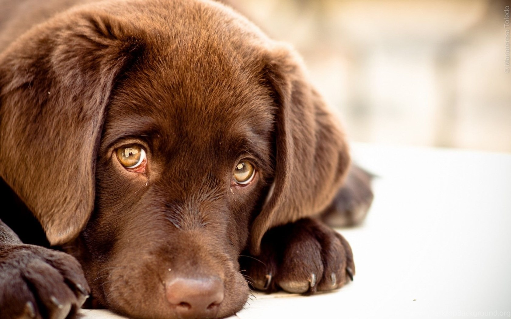 Hd Cute Dog Wallpapers Pc Wallpapers Desktop Background