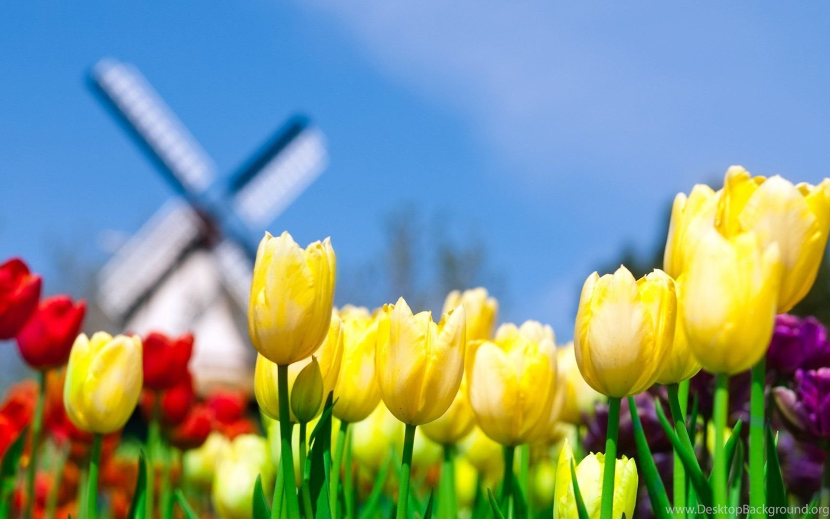 Spring Flowers Desktop Wallpapers Wallpapers Hd Wide Desktop Background