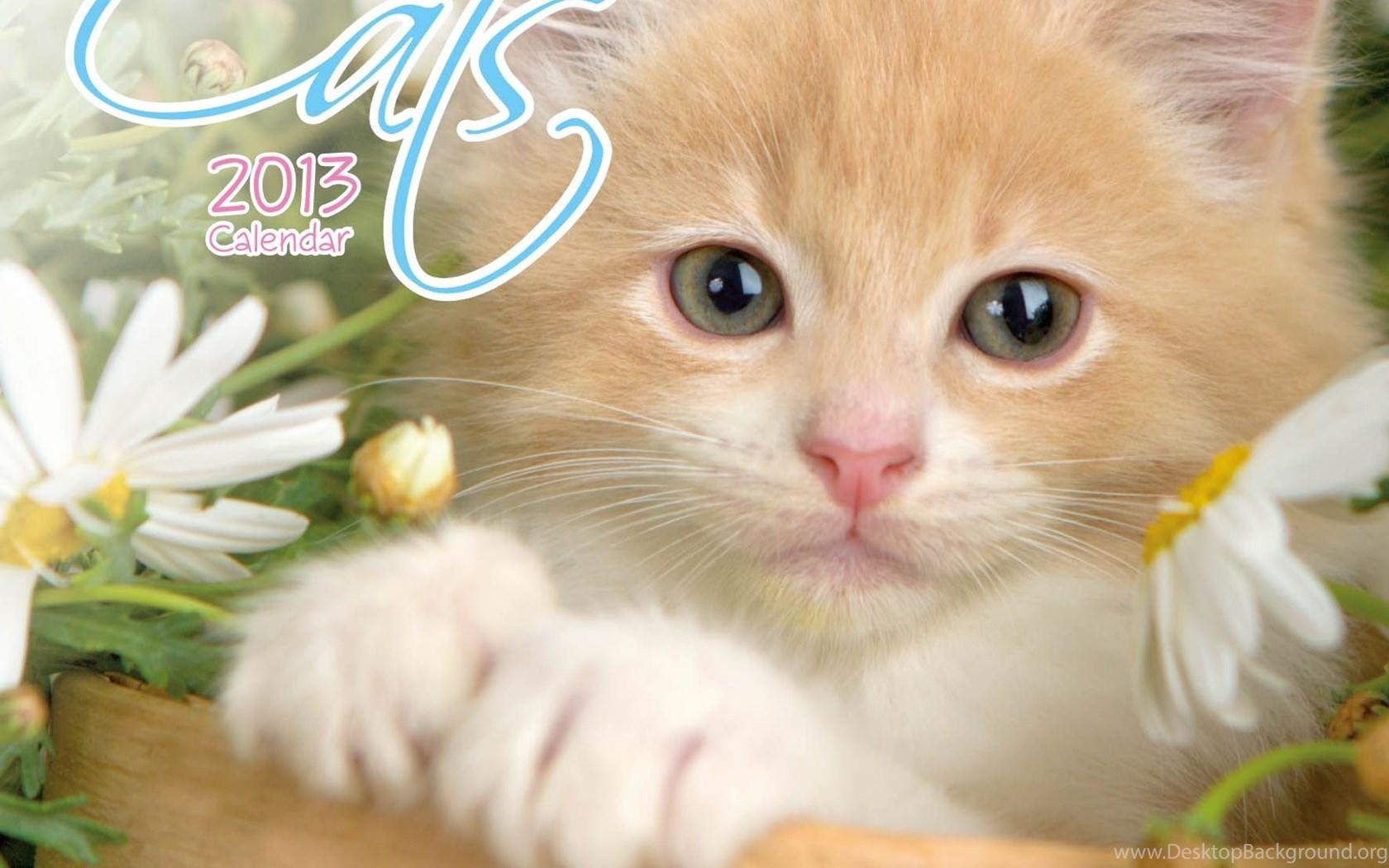 Beautiful Cats Wallpapers FunAwake Desktop Background