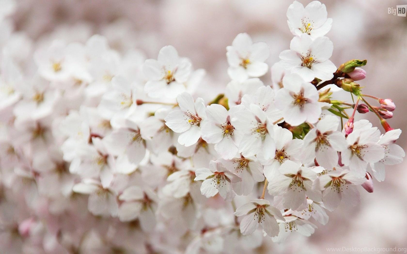 10 spring flowers hd wallpapers desktop background widescreen mightylinksfo