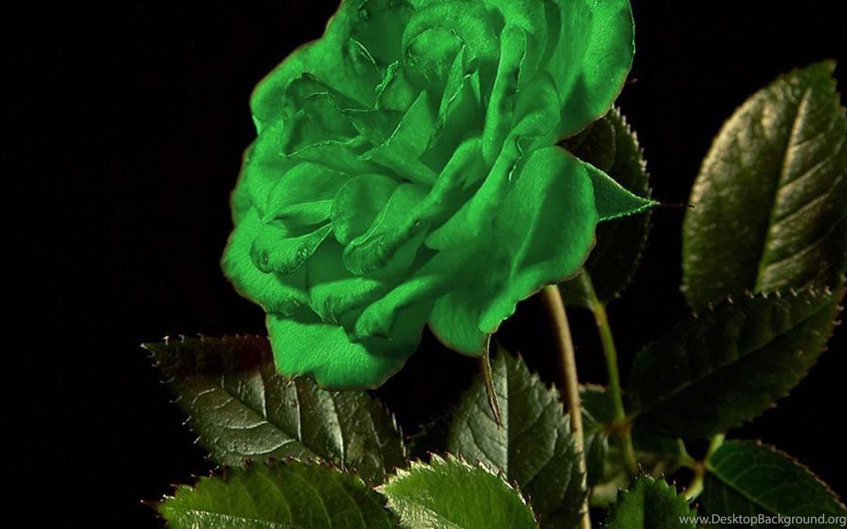открытка зеленая роза
